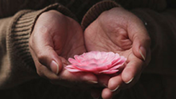 Hands holding a pink flower